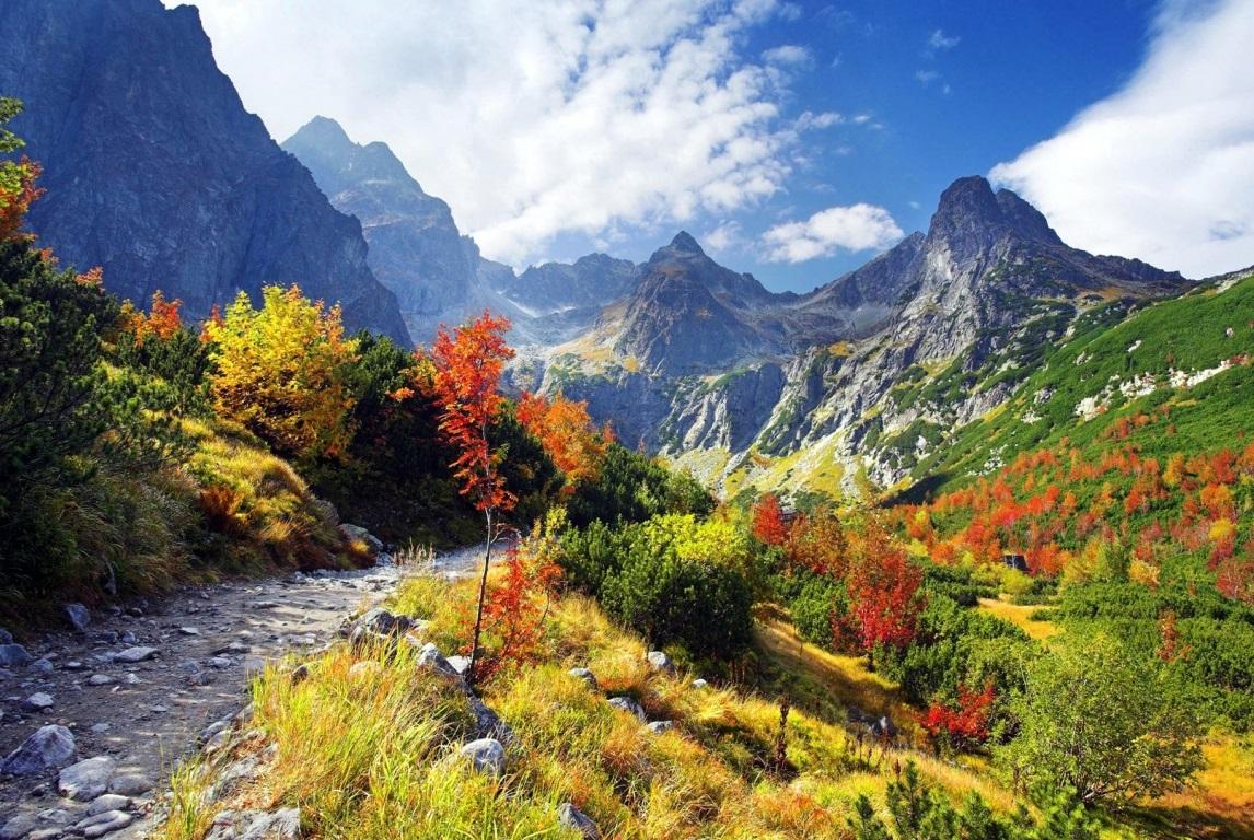 Turnus jesienny